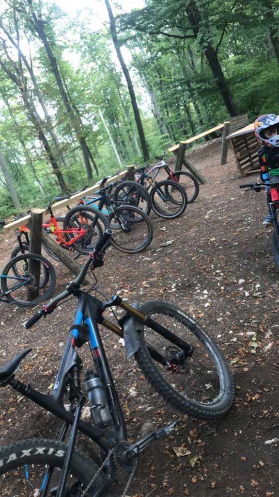Bicikli u šumi