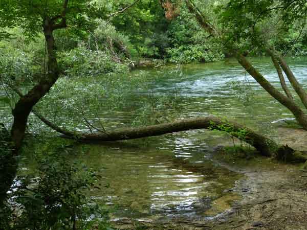 U obranu voda i šuma